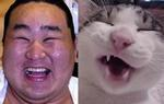 朝青龍と猫おもしろ画像