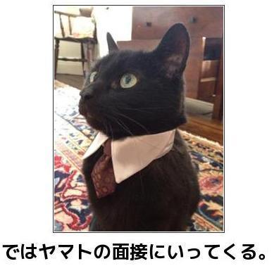 [bokete]黒猫さんの就職活動