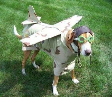 パイロット犬