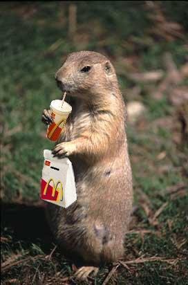プレーリードッグマクドナルドおもしろ画像