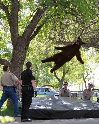 クマを助ける人間の図