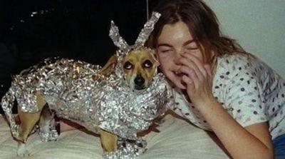 目が怖い犬