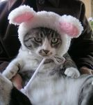 猫コスプレかわいい画像