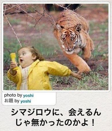 人違い、というかトラ違いは危険過ぎる [bokete]