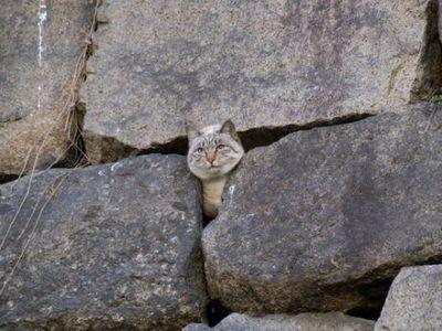 石垣にハマった猫 おもしろ画像