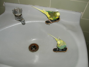 洗面台はスケボーに最適なのカーブを備えている