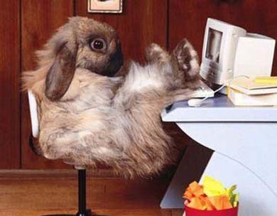 オフィスで偉そうなウサギの上司