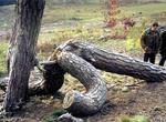 バック体位樹木おもしろ画像